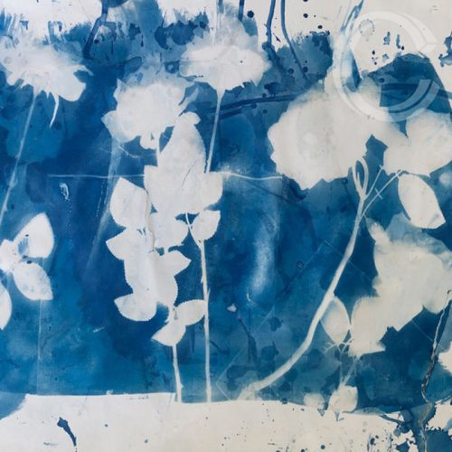 Bloom cyanotype by Carolyn Quartermaine