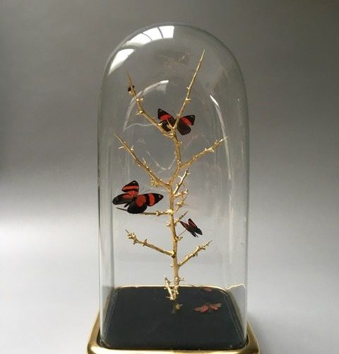 Small Square Dome With Butterflies by Tennant & Tennant